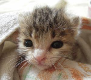 Img952_cat_big.jpg
