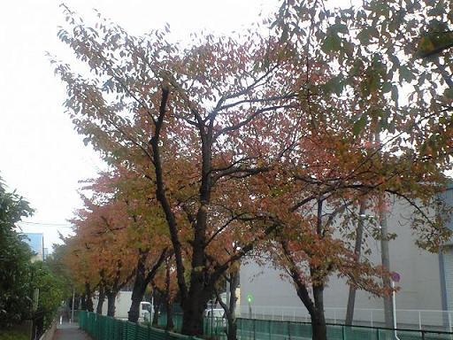 11-12-09-2.jpg