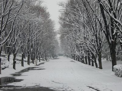 雪の日、鶴間公園