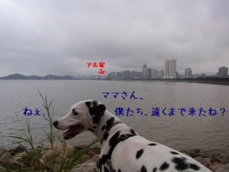 $中国生まれアルよ-ダルメシアン アル 海1