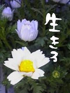 20060523192739.jpg