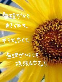 tokodai.jpg