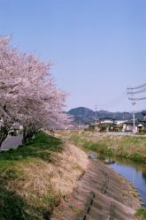 20110421koizumi.jpg