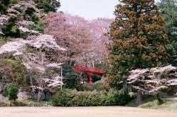 akabashi.jpg