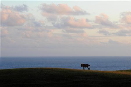 日本に8種類しかいない在来種の一つ「与那国馬」。東シナ海を見下ろす牧場に放牧されている。のどかな風景だが、すぐ近くで中国船の目撃例がある=沖縄県与那国町(植村光貴撮影)<br />