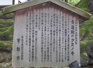 青蓮院blog02