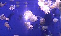 09'鹿児島旅行