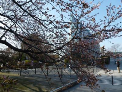 東工大桜3 4.2