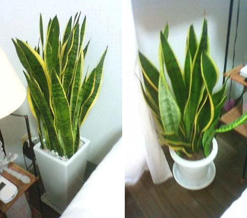 20091003植物①