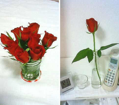 20091003植物②
