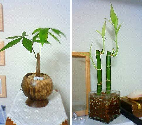 20091003植物③
