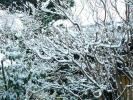 雪雪雪の境内