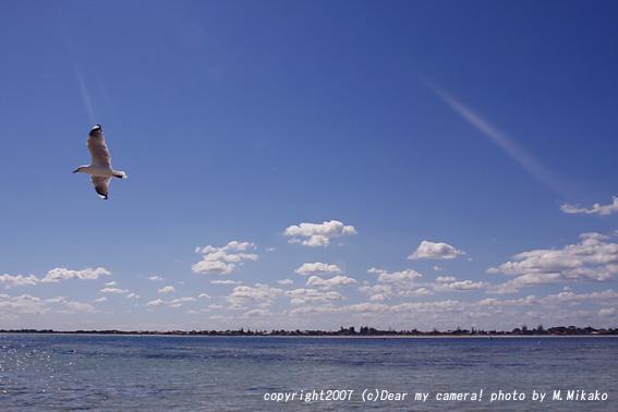 birds0456copy.jpg