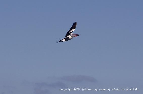birds0579copy.jpg