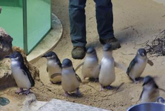 penguinisland7.jpg