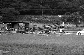 tamagawataifu10.jpg