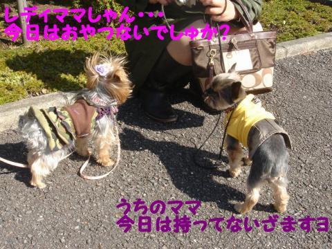 20071113145709.jpg