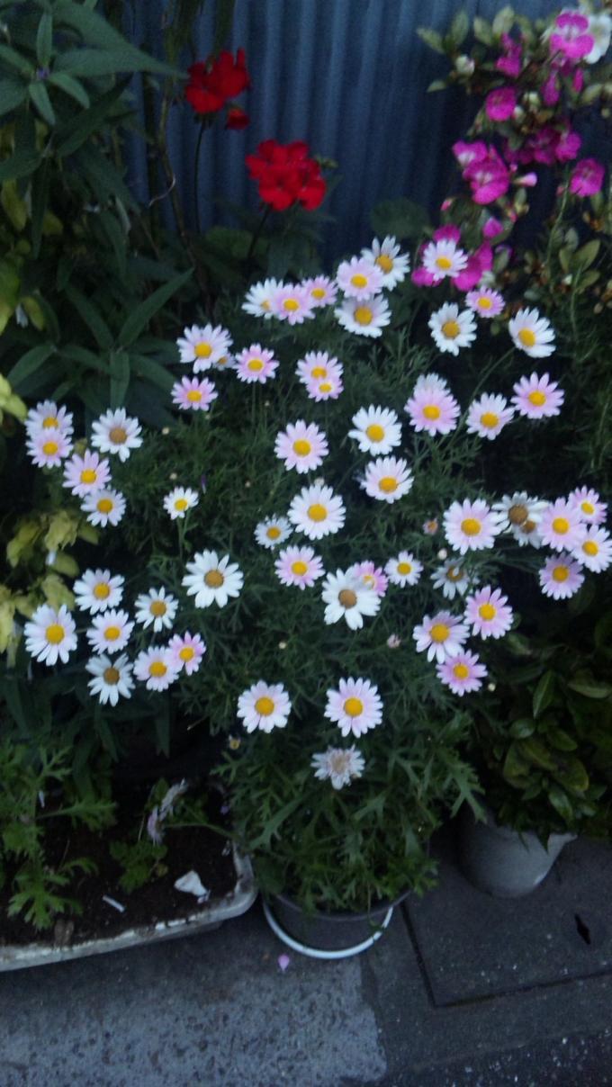 Flowers_20110526