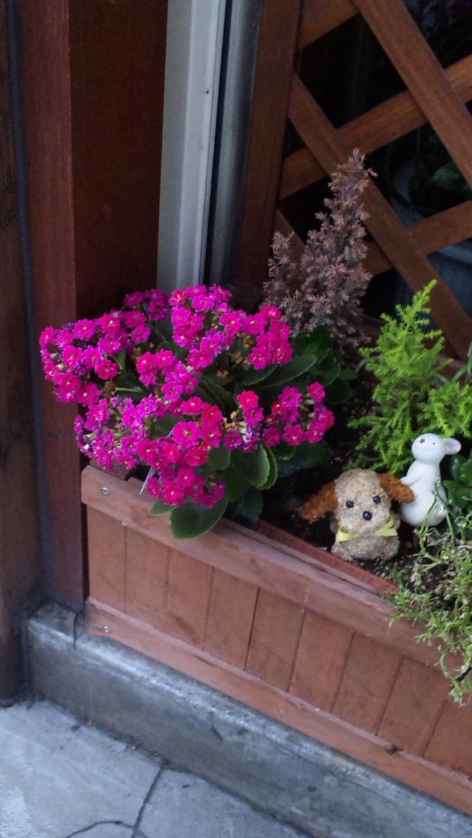 Flowers_20110528