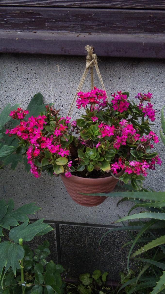 Flowers_20110530