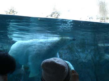 水の中優雅に泳いで・・・