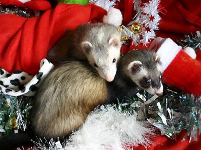 『ろきちゃん、クリスマスってナニ?』『リースを壊す日よ~♪』