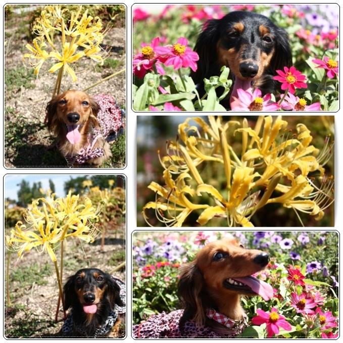 お花と一緒