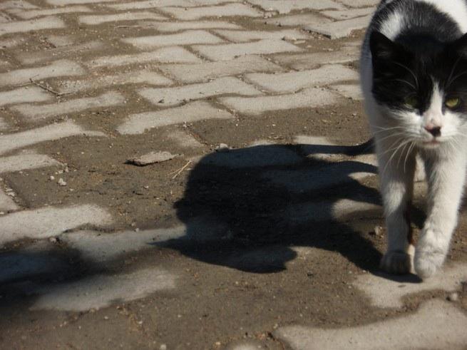 cat_20080309003700.jpg