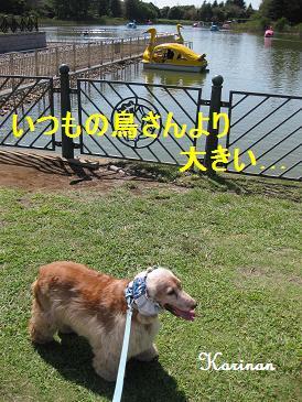 ブログ 9.15 ① IMG_3668