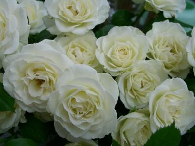 ウエディング用生花ホワイト