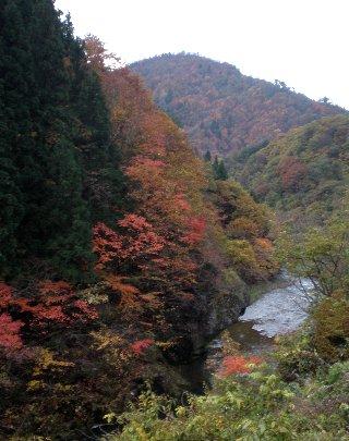 11月上旬の紅葉