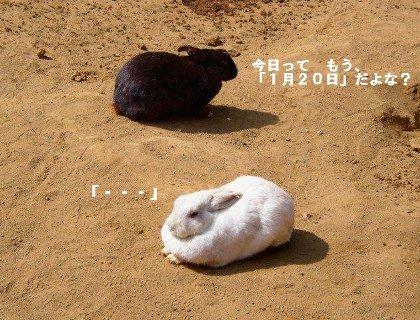 フリー写真からお借りしました、新年ウサギ