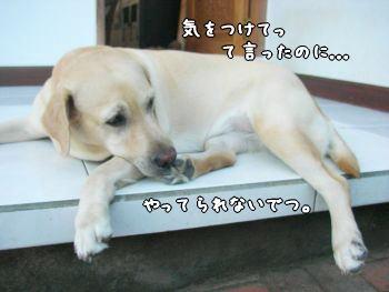 2007-10-23-4.jpg