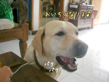 2007-10-27-6.jpg