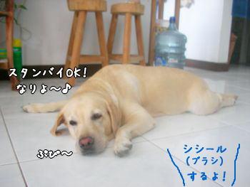 2007-11-10-3.jpg