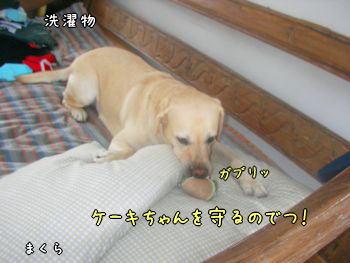 2007-11-11-6.jpg