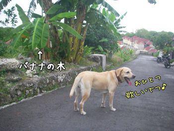 20071206-4.jpg