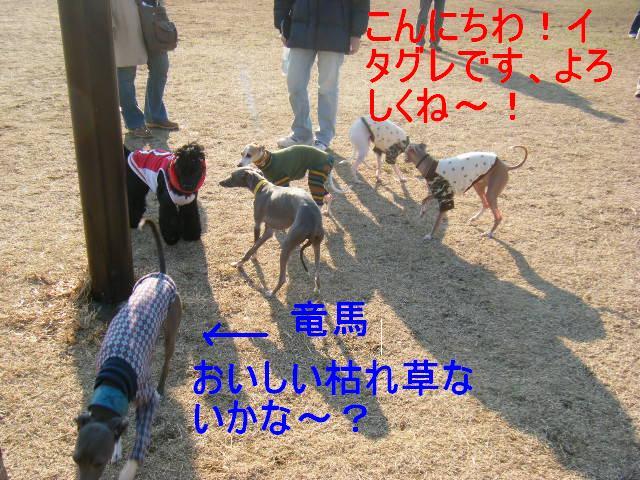 2007_1215城南島&辰巳1