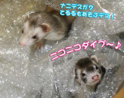 momoko1026-3.jpg