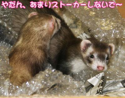 momoko1026-5.jpg