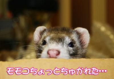 momoko1026-6.jpg