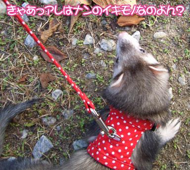 momoko1109-1.jpg