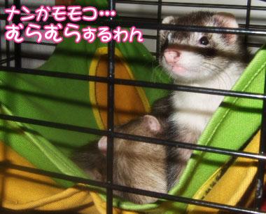 momoko1110-1-.jpg