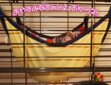 momoko1114-1.jpg