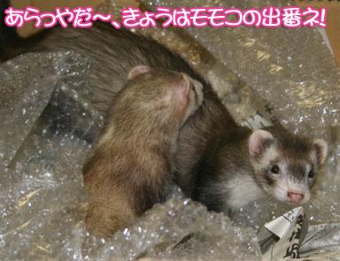 momoko1117-0.jpg