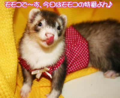 momoko1125-1.jpg