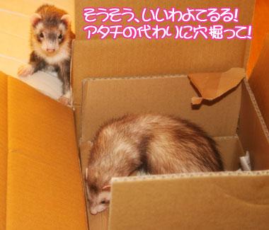 momoko1125-3.jpg