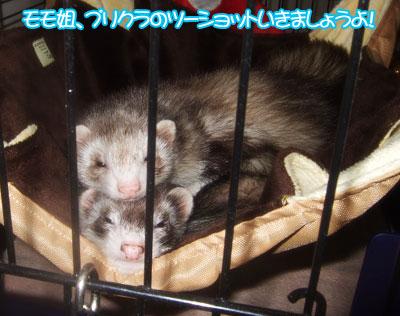 momoko1125-4.jpg