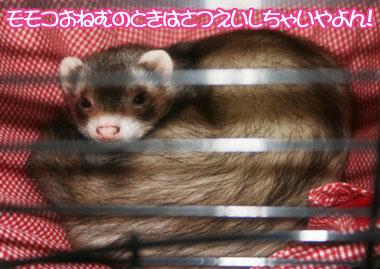 momoko1125-5.jpg