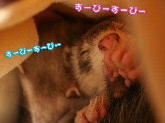 momoko1224-2.jpg